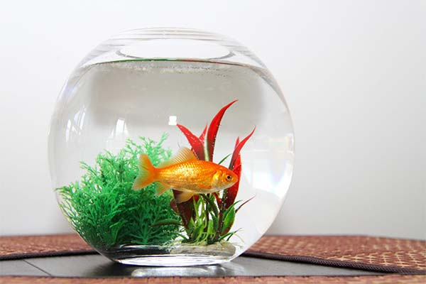 Аквариум с рыбками во сне