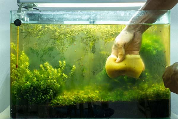 Чистить аквариум во сне