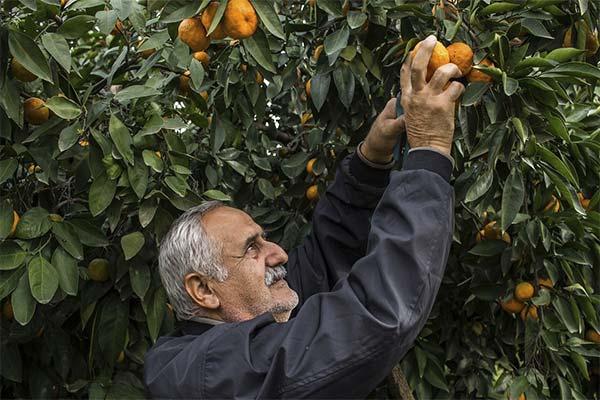 Что делали во сне с мандаринами