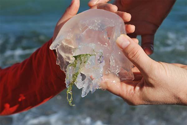 Что делали во сне с медузой