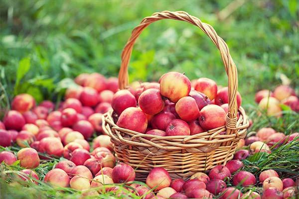 Где находились во сне яблоки