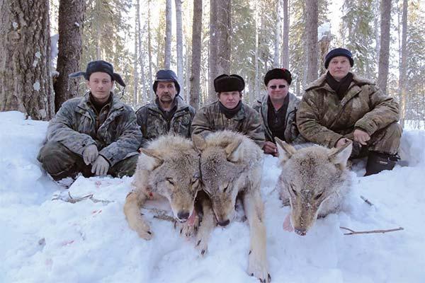 К чему снится убийство волка