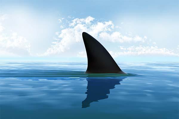 Какая часть акулы приснилась