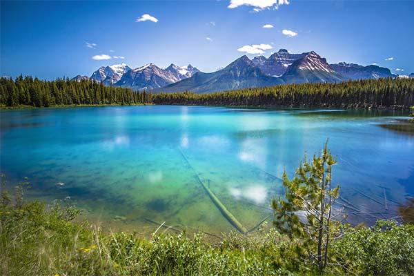 Сонник озеро