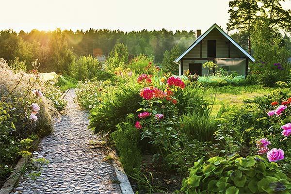 Сонник сад