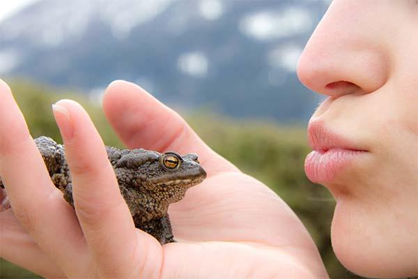 Целовать жабу во сне