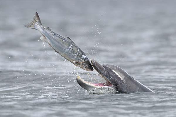 Дельфин ест рыбу во сне
