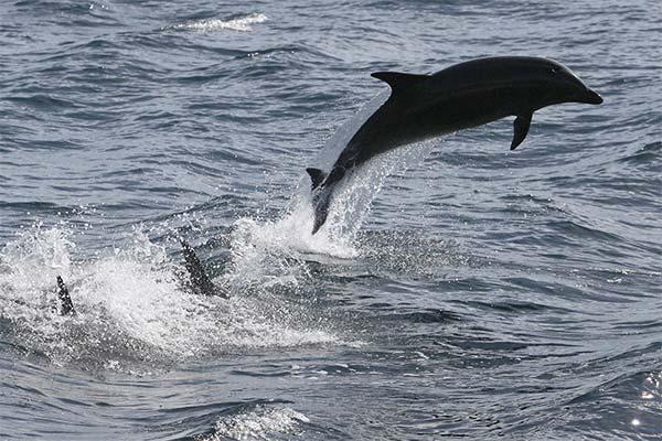 Какого цвета приснился дельфин