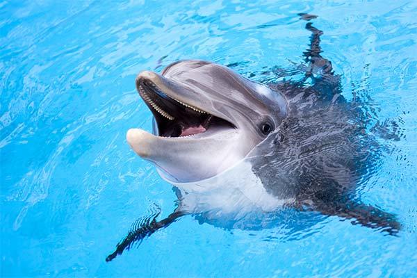 Сонник дельфины