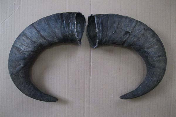 Черные рога