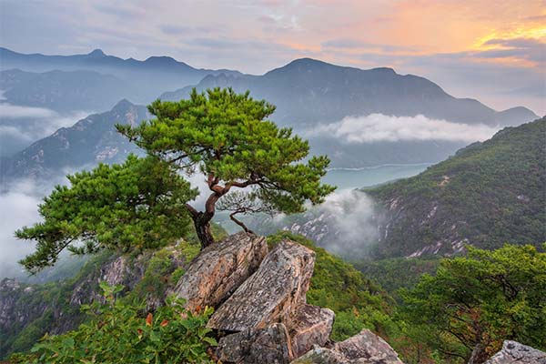 Деревья и горы