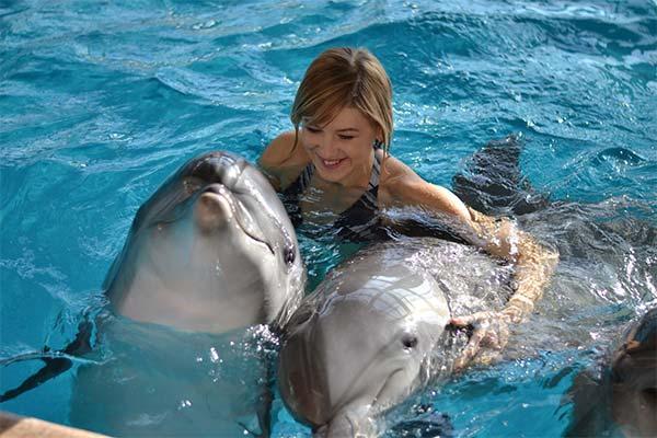 К чему снится плавание с дельфинами