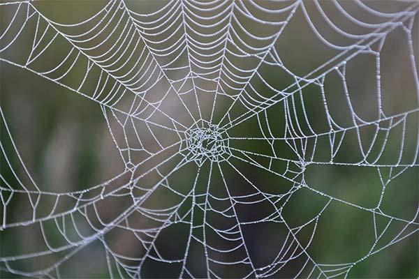 Какого цвета приснилась паутина