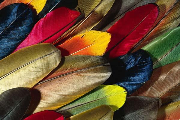 Какого цвета приснились перья