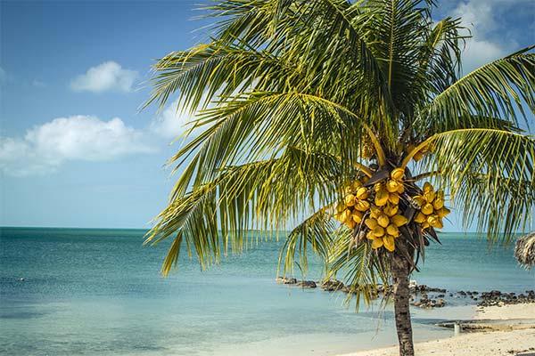 Пальма на берегу моря