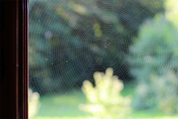 Паутина на окне