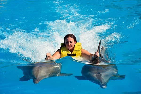 Сонник плавать с дельфинами
