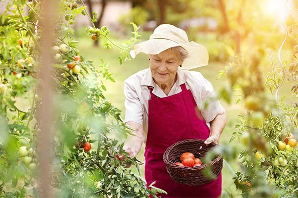 Бабушка на огороде