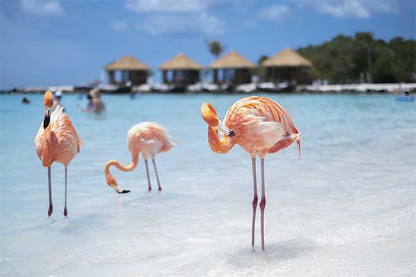 Фламинго на берегу моря