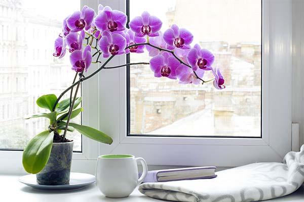 Орхидея во сне