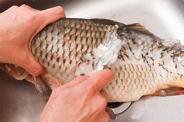 Сонник чешуя от рыбы