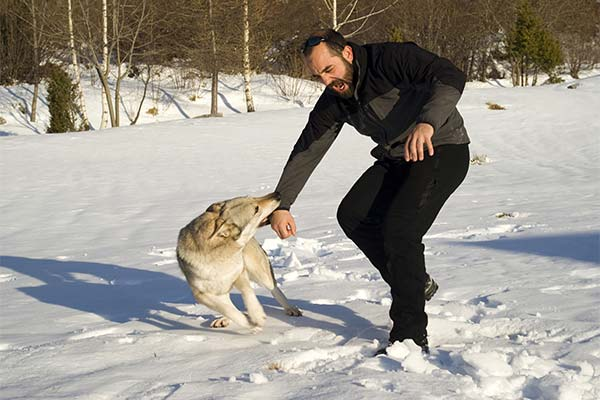 Сонник укусил волк