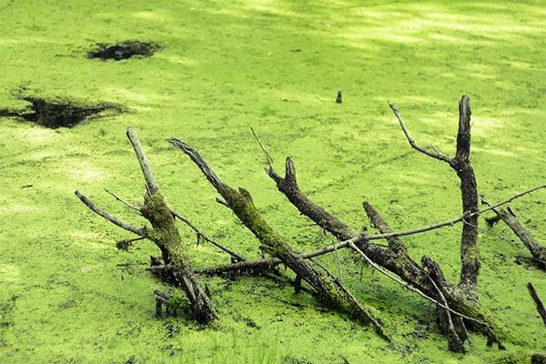 Тина в болоте