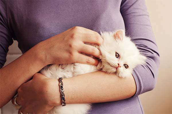 Держать в руках кошку
