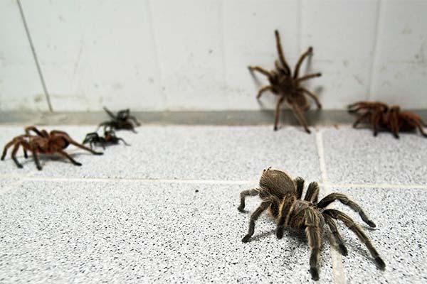 К чему снится укус паука