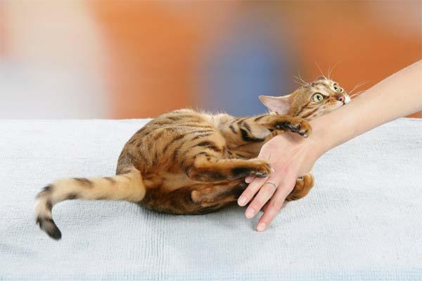 Кошка расцарапала руки
