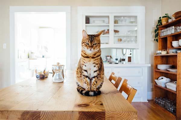 Кошка в квартире