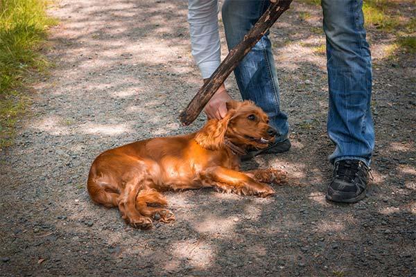 Сонник бить собаку