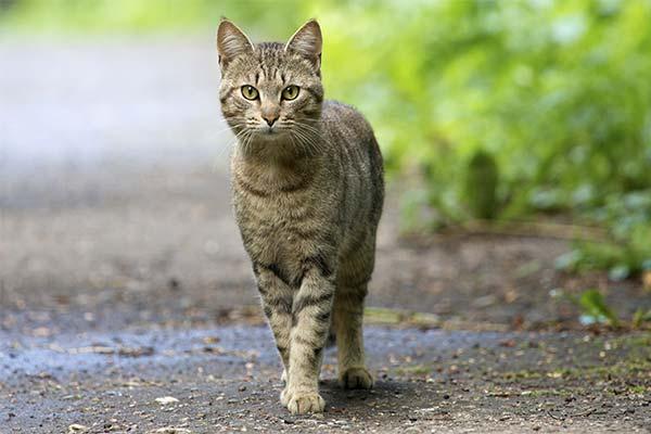 Сонник кошка