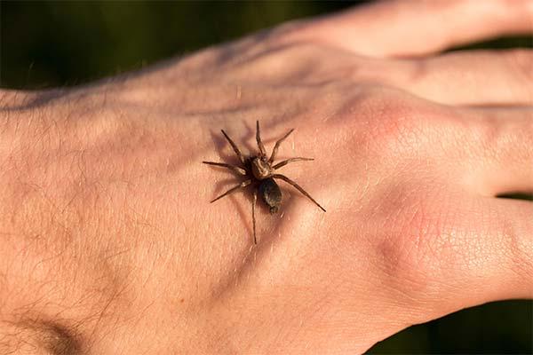 Сонник укус паука