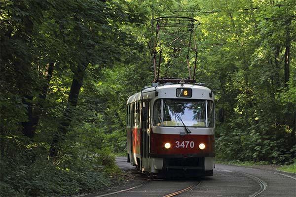 Трамвай в лесу во сне