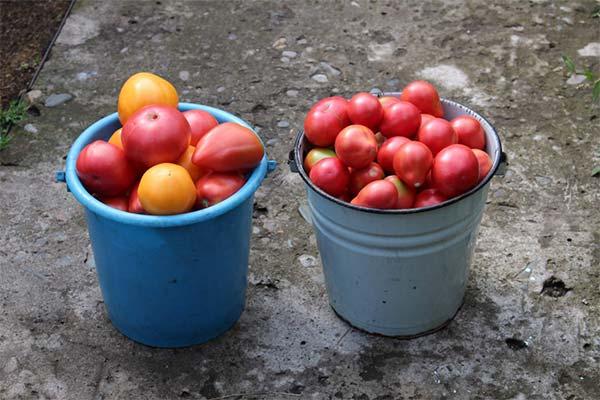 Ведро с помидорами во сне