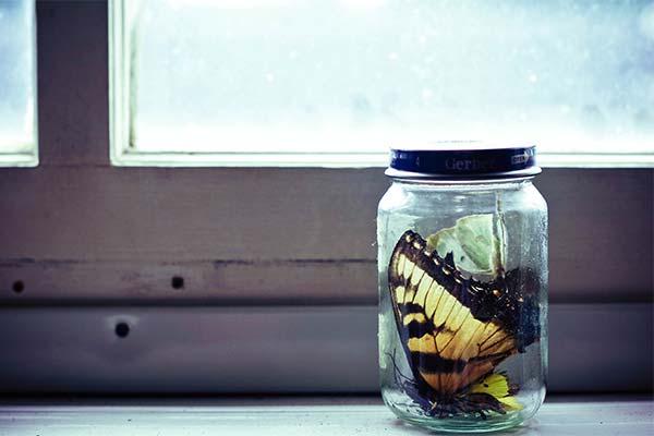 Бабочка в банке