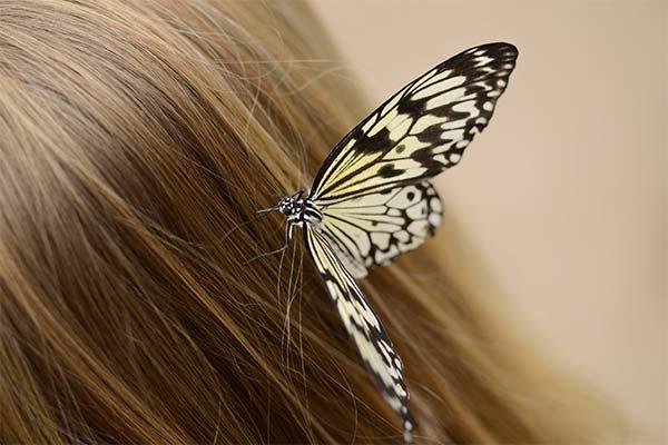 Бабочка в волосах