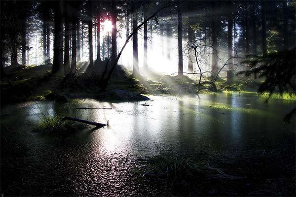 Черное болото
