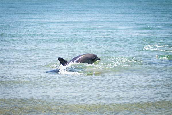 Дельфин на берегу моря