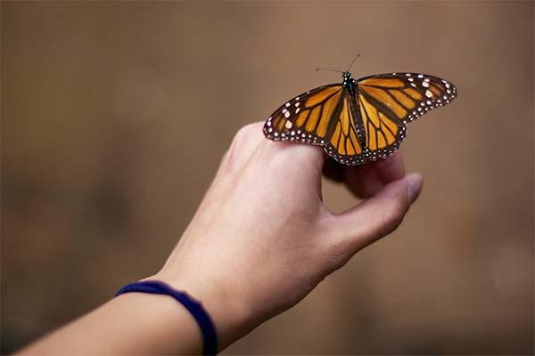 Держать бабочку в руках