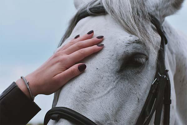 Гладить белую лошадь