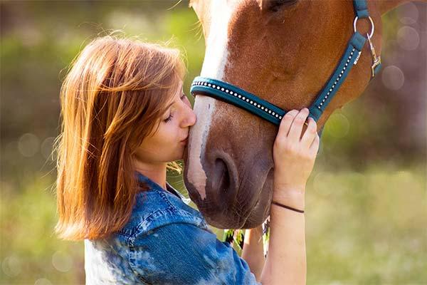 К чему снится гладить лошадь