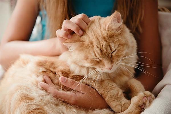 Обнимать и гладить кошку