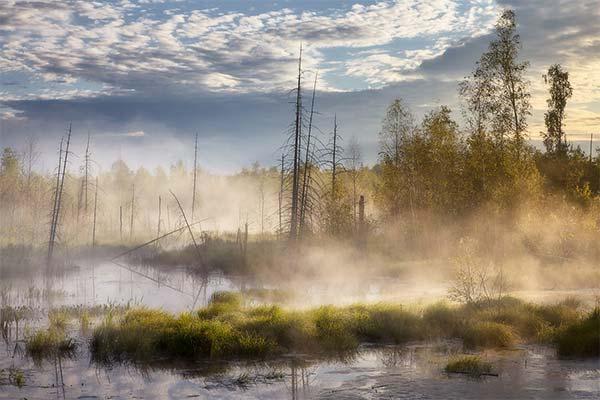 Туманное болото во сне