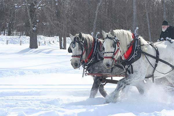 Ехать на лошади по снегу