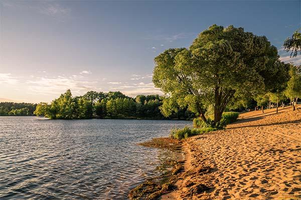 Сонник берег реки