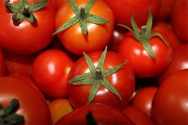 Сонник большие красные помидоры