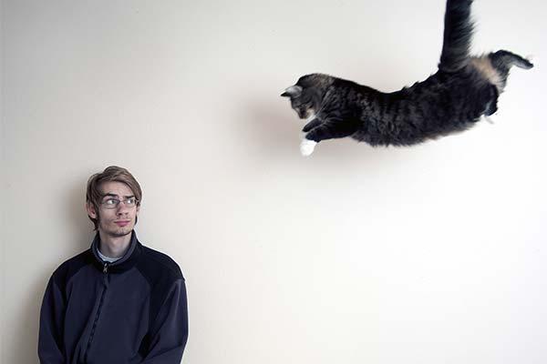 Сонник драться с кошкой
