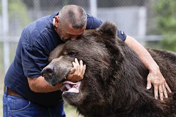 Сонник драться с медведем